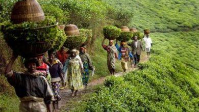 صورة الذكاء الاصطناعي| كيف تعتمد الزراعة على البيانات الالكترونية لمواجهة تحدي الأمن الغذائي بإفريقيا