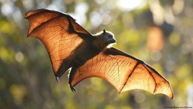 صورة الذكاء الاصطناعى يحدد 1.7 مليون خفاش فى الغابات الإنجليزية