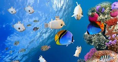 صورة تطوير مجموعة من الأسماك الروبوتية قادرة على تنسيق حركاتها تحت الماء