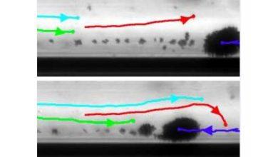 صورة روبوتات متناهية الصغر لنقل الدواء داخل الجسم