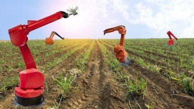 صورة مستقبل الزراعة.. حقول رأسية تحت إشراف الذكاء الاصطناعي