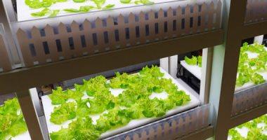 صورة مزرعة عمودية تدار بالذكاء الاصطناعي.. والروبوتات تنتج مئات أضعاف المحاصيل