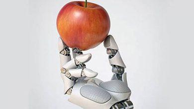 صورة الذكاء الاصطناعي يسهم في ابتكار أطباق طعام جديدة