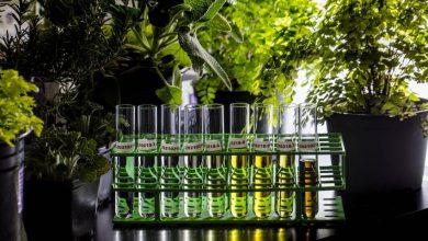 صورة الذكاء الاصطناعي يساعد على تطوير منتجات نباتية جديدة
