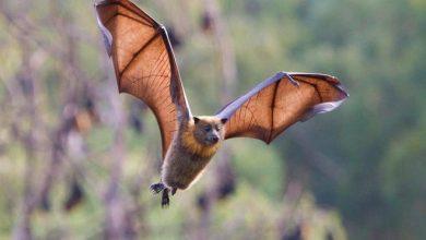 صورة الذكاء الاصطناعي يكشف وجود الخفافيش أسفل الجسور