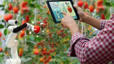 """صورة """"الذكاء الاصطناعي"""" يغزو القطاع الزراعي.. حقول ذكية"""