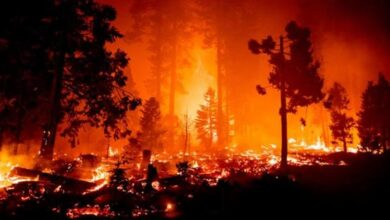 صورة الذكاء الاصطناعي يكافح حرائق الغابات في كاليفورنيا